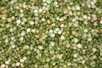 Bulk Beans, Bean Pea Green Split Org, 25-Pound