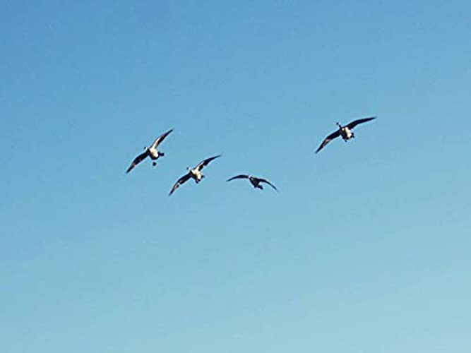 Heartland Waterfowl Season 4 Episode 13