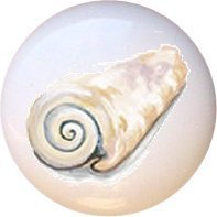 Artistic Seashell Design510 Drawer Pull Knob