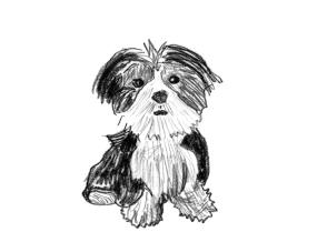 1000 Dog Portraits: From the People Who Love Them (1000 Series