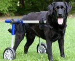Dog Wheelchair - Small - Made By Walkin' Wheels