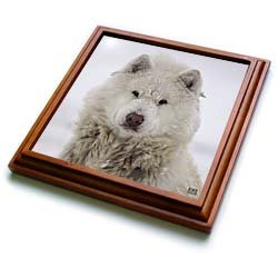 Canadian Eskimo Dog Hudson Bay Churchill Northern Canada - 8x8 Trivet With 6x6 Ceramic Tile