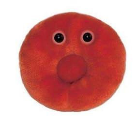 ジャイアントマイクローブス 赤血球