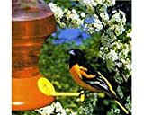 Fliteline Oriole 52 oz. Bird Feeder &#8211; 3 Feeding Stations, Bee/Wasp Guards, Pole Mount or Hang