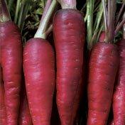 Organic Red Dragon Carrot Seeds - 1 gram