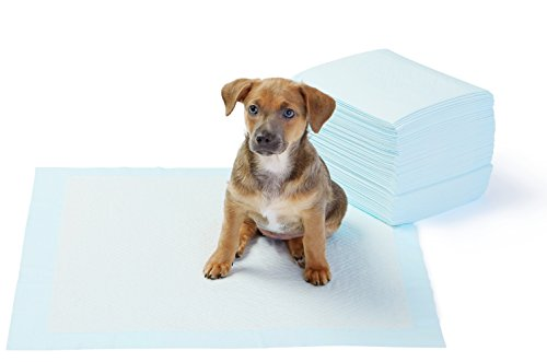 AmazonBasics-Pet-Training-and-Puppy-Pads-Regular