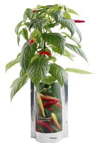 Blooms in a Bag Thai Dragon Pepper Garden Kit