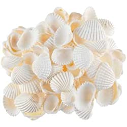 Sea Shells white ,500 Gm Pack ,Used In Aquariums ,Art & Crafts ,Decorations, Table Decoration , Approx,( 500 Pcs ) size 2cm
