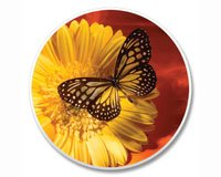 Butterfly Auto Coaster, Single Coaster for Your Car