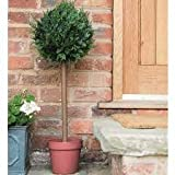 Gardman 02852 Topiary Ball Tree Cypress Effect