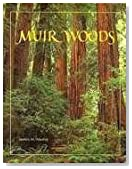 Muir Woods: The Ancient Redwood Forest Near San Francisco