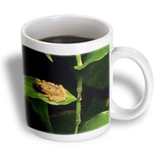 3Drose Mug_72316_2 Coqui Frog On Leaf, El Yunque Forest, Puerto Rico Ca27 Ksc0000 Kevin Schafer Ceramic Mug, 15-Ounce