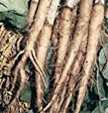 Salsify Mammoth Sandwich Island 90 Seeds per Packet