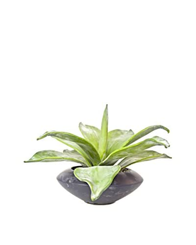 Creative Displays Wide Leaf Aloe Plant, Green/Black