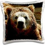 WhiteOak Photography-Bears - Grizzly Bear just out of water - 16x16 inch Pillow Case