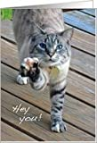 Bengal Cat - Hey You Good Luck Card