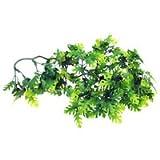 Plant Amazon
