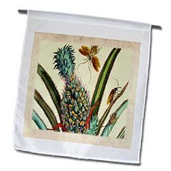 Florene Vintage Botanical - Photo Of German Botanist n Artist 1700 Pineapple Painting - Flags - 12 x 18 inch Garden Flag