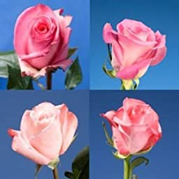 100 Fresh Cut Pink Mother\'s Day Roses | Fresh Flowers Express Delivery | Perfect Gift for Mother\'s Day.