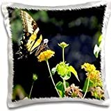WhiteOak Photography Yellow Butterfly Swallowtail Butterfly - 16x16 inch Pillow Case