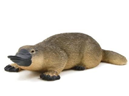 Image result for duck billed platypus