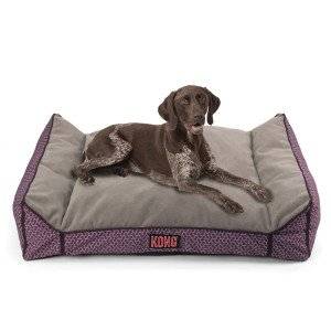 Amazon Com Kong Lounger Dog Bed Purple Pet Supplies