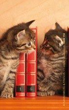 """Magnet """"Kätzchen im Bücherregal"""""""