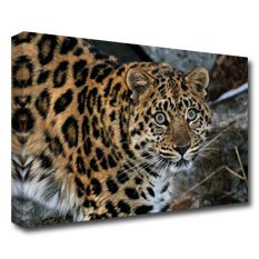 wild-female-amur-leopard-panthera-pardus-ori-30-x-20in-canvas-print-framed-and-ready-to-hang