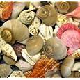 Bumper Bucket of Seashells - 500g