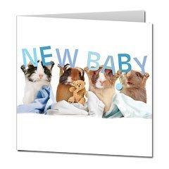 "Guinea Pigs ""Baby Boy"" Square Greeting Card front-4937"