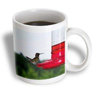 mug_14198_1 Rebecca Anne Grant Photography Birds - Hummingbird On Feeder 2 - Mugs - 11oz Mug