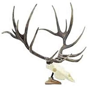 Big Rack Shedz Elk Raxx Figurine