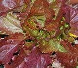 Premier Seeds Direct LET14 Lettuce Heirloom Red Velvet Finest Seeds (Pack of 2000)