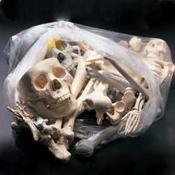 Anatomical Chart Co. Bags of Bones Item #: BONES1