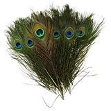 Mor Pankh 5 Pcs / Morpankh / Natural Peacock Feathers / Natural Beautiful Peacock Eye Feathers Tails (Set Of 5...