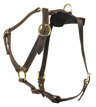 Dean & Tyler Choice Brass Dog Harness, Medium,