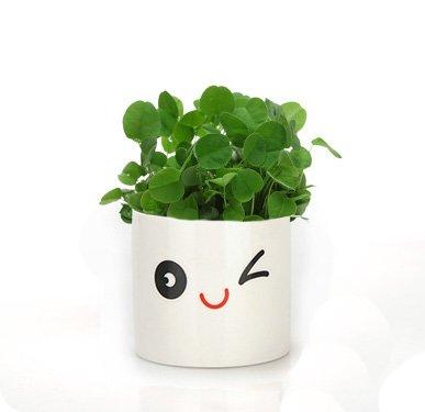 preciosa-expresion-jardineria-mini-blanco-olla-de-ceramica-de-la-flor-del-florero-del-pote-de-los-bo