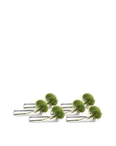Chive Set of 6 Test Tube Flat Vases, Clear
