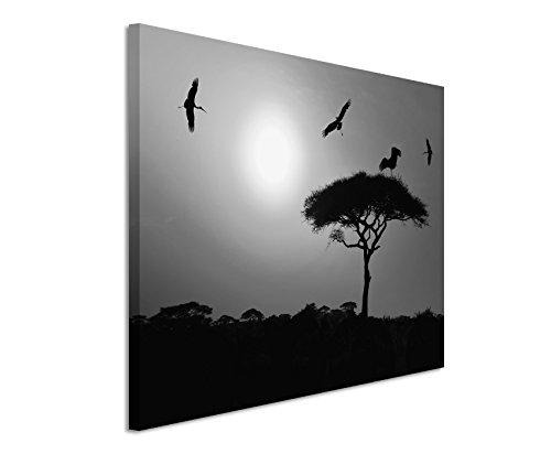 50x70cm Leinwandbild schwarz weiß in Topqualität Akazienbaum mit Vögeln Afrika