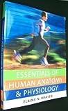 Essentials of Human Anatomy &Physiology