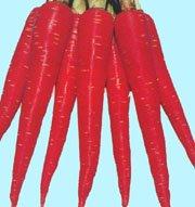 Kesar - Carrot Seed Packet