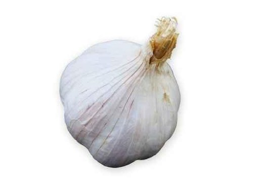 The clove of garlic - 24