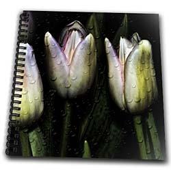 Computer enhanced tulips - Memory Book 12 X 12 Inch