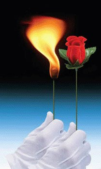 Torch to Rose Magic Trick
