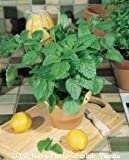 Premier Seeds Direct HRB17 Herb Lemon Balm Melissa Officinalis Seeds (Pack of 2000)