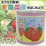 野菜や果物の栽培缶!「トライ」 5缶セット