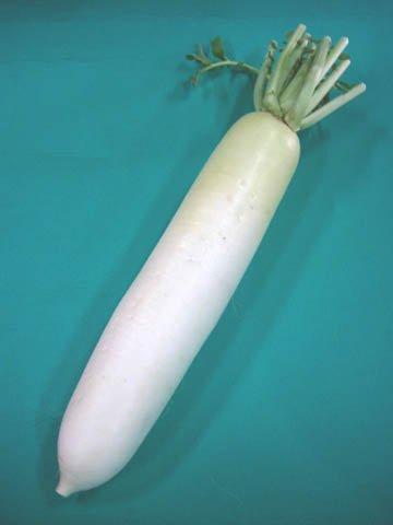日常の一般野菜 だいこん ダイコン 大根 1本