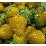 Yellow -Strawberry (Yellow Wonder) 20 Seeds RAR ***Original-Seeds*** by Samenchilishop