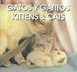 Gatos Y Gatitos/Kittens & Cats (Spanish Edition)