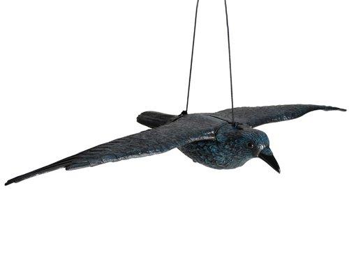 siena-garden-672958-cuervo-volador